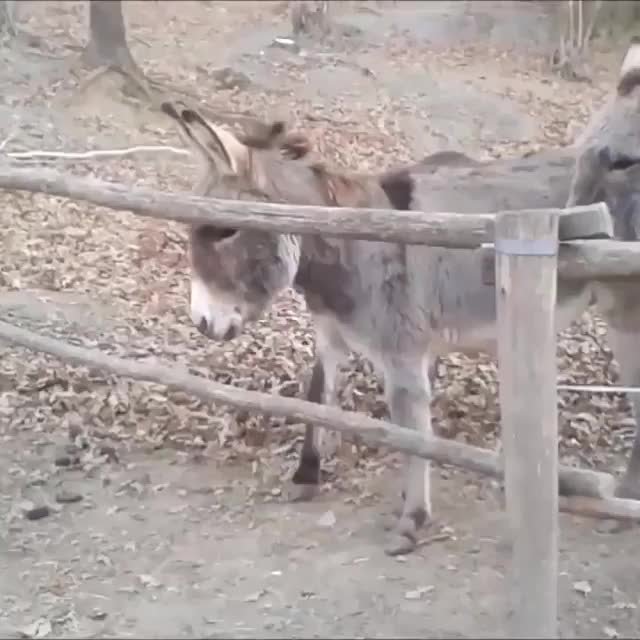 Watch Donkey Bro (reddit) GIF by FarSizzle (@farsizzle) on Gfycat. Discover more related GIFs on Gfycat