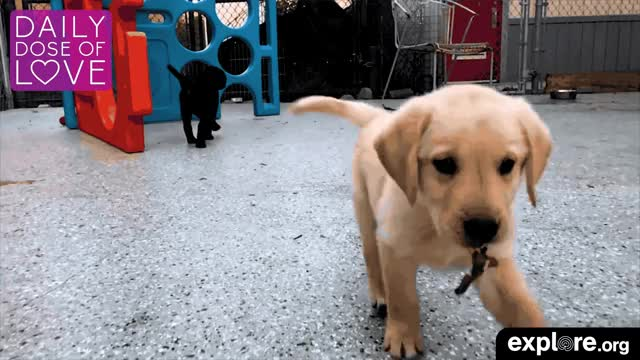 Watch and share Daily Dose Of Love GIFs and Animal Live Cam GIFs by Explore.org on Gfycat