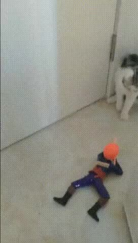 Watch and share Coward GIFs and Cute GIFs by soees on Gfycat