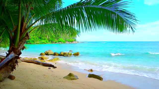 Watch and share Tropical Island GIFs and Relaxing Nature GIFs by dmaier on Gfycat
