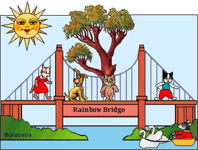 Watch and share Animated Cat Graphics Rainbow Bridge, Angels, Heaven animated stickers on Gfycat