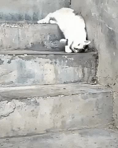 Watch and share 05 GIFs by pierdze po kotach on Gfycat