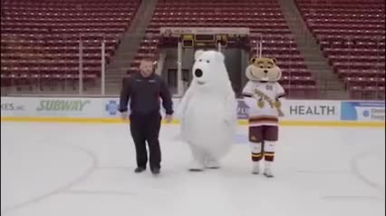 Watch and share White Bear On Ice' GIFs on Gfycat
