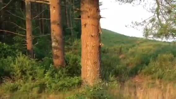 animalsbeingjerks, Weasel chases a squirrel around a tree (reddit) GIFs