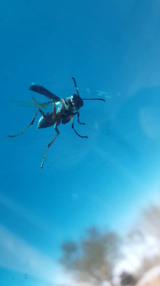 Watch and share Wasp GIFs by kysgwgw on Gfycat