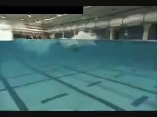 Watch and share Butterfly Stroke GIFs and Swimming GIFs on Gfycat