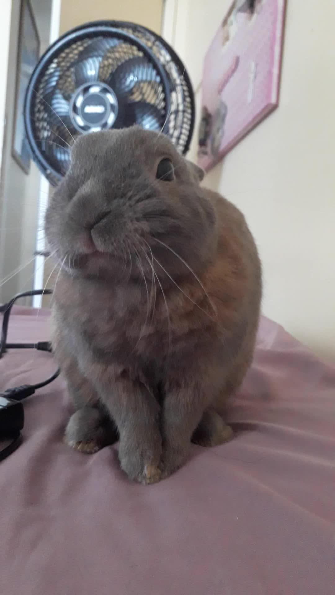 bunny, rabbit, 20190313 122742 GIFs