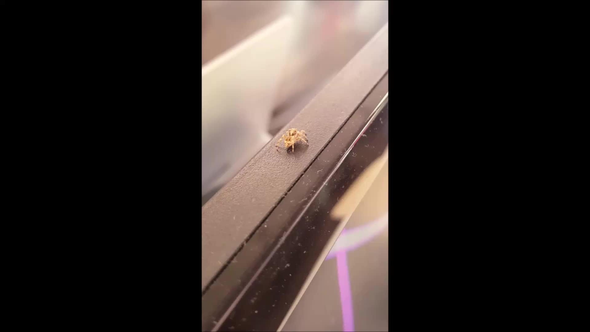 spiderbro, Cute spider bro GIFs