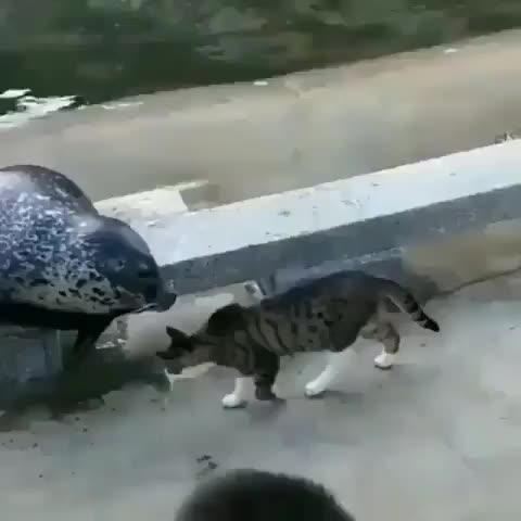 cat, Cat vs Seal GIFs