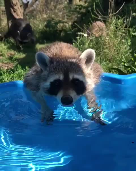 Watch and share Sanctuary GIFs and Rescue GIFs by b12ftw on Gfycat