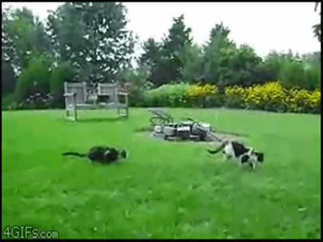 Watch and share Or Passions Cat's GIFs and Смех GIFs on Gfycat