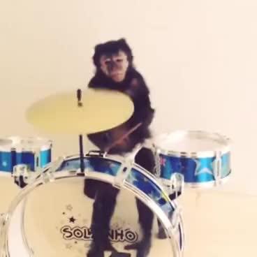 Monkey drums GIFs