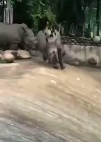 Watch and share Rhino Having Fun GIFs and Rhinoceros GIFs by esberat on Gfycat