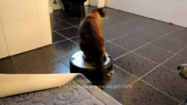 Watch and share Roomba Cat Swats Dog Pit Bull Sharky. Max-Arthur On IRobot Roomba Vacuum. Cat Vs Dog. HelensPets.com GIFs on Gfycat