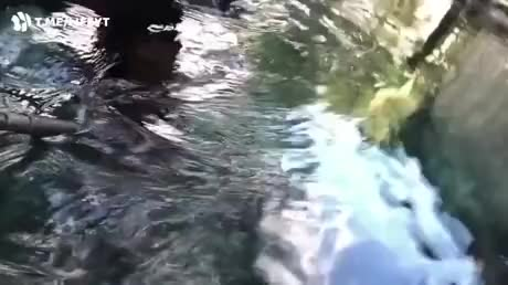 Watch and share Underwater GIFs and Crocodile GIFs by esberat on Gfycat
