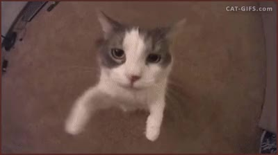 Watch and share Cat1.gif GIFs by Streamlabs on Gfycat