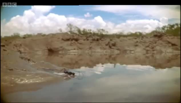 Watch this ant GIF on Gfycat. Discover more ant, ants, attenborough, australia, bbc, bbc earth, david, insects, mangrove, nature, pets & animals, swim, swimming GIFs on Gfycat