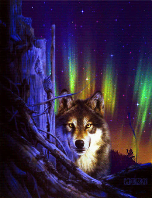Живые картинки с волками, открытка однокласснику картинки
