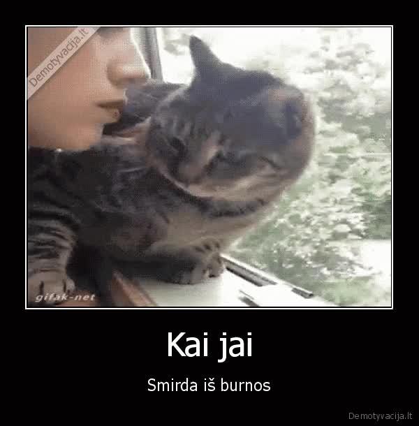 Watch blogas, burnos, kvapas,smirda, is, burnos GIF on Gfycat. Discover more related GIFs on Gfycat