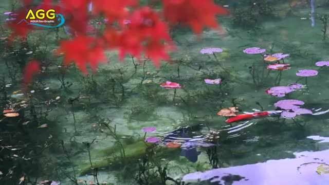 Watch and share Naturegifs GIFs and Fish GIFs by P.Gifs on Gfycat