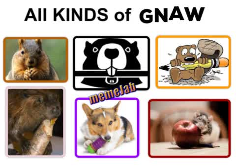 Watch and share All Kinds Of Gnaw GIFs and Squirrel GIFs by Petty Parker on Gfycat