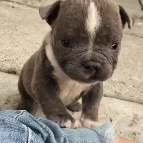Watch and share His Cleft Palate Means He's Extra Rare, But Also Extra Cute GIFs by mayaxs on Gfycat