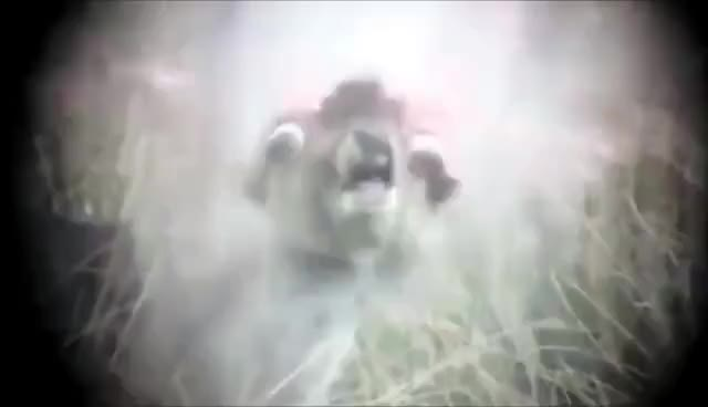 Watch Deer head explosion [18+] GIF on Gfycat. Discover more Down, Fireworks, John, Speed, animals, backwards, cover, deer, elephant, explosion, head, inside, legend, ll Tags, ordinary, reverse, slow, wildlife, your, zoo GIFs on Gfycat