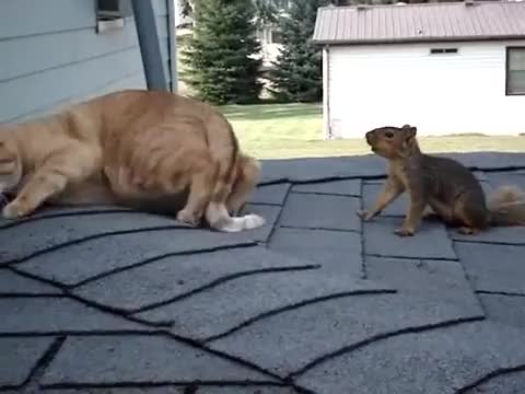 Watch this cat GIF on Gfycat. Discover more AnimalsBeingBros, Awww, animalsbeingbros, awww, cat, squirrel GIFs on Gfycat