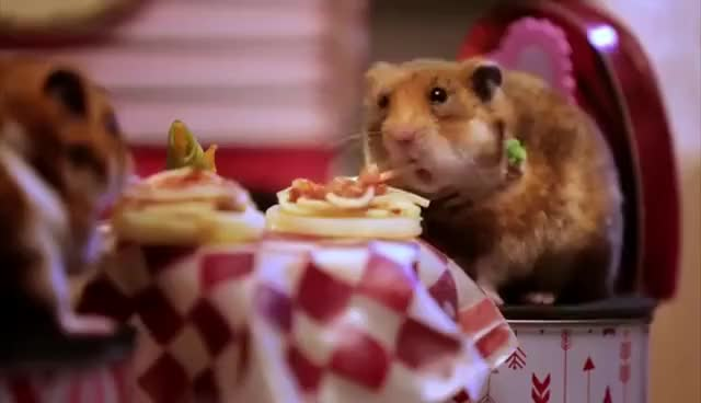 Watch hamster date GIF on Gfycat. Discover more cute, hamster GIFs on Gfycat