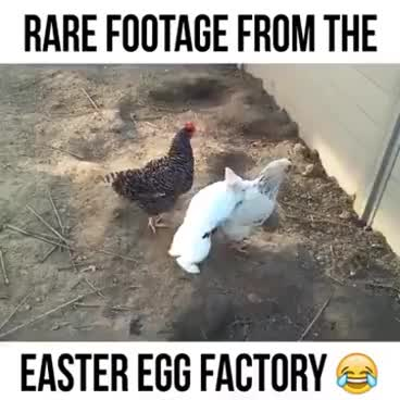 Watch and share Rare Footage From The Easter Egg Factory GIFs on Gfycat