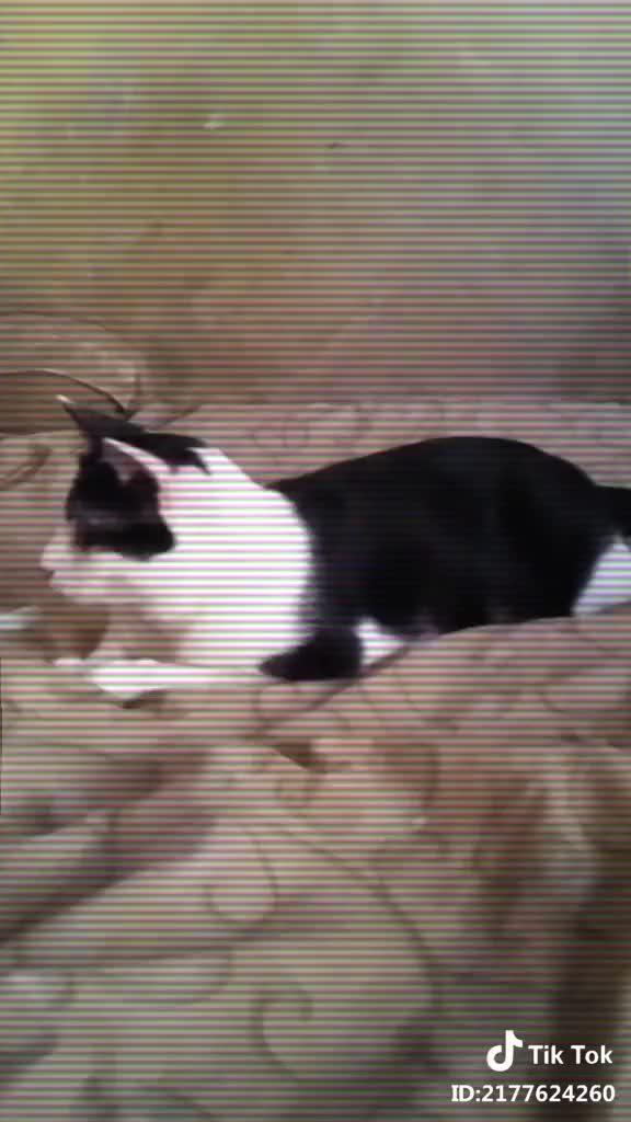 Watch and share Kucingaktif GIFs and Yabeginiini GIFs by interesting on Gfycat