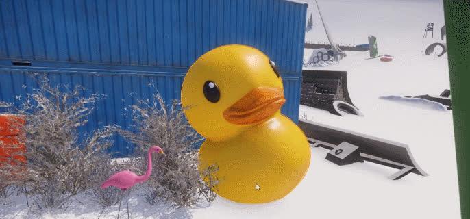 animal, animals, bird, duck, ducks, nature, Duck GIFs