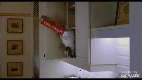 Watch Nine Lives GIF by @comedymovies on Gfycat. Discover more catgifs, funny, movies GIFs on Gfycat