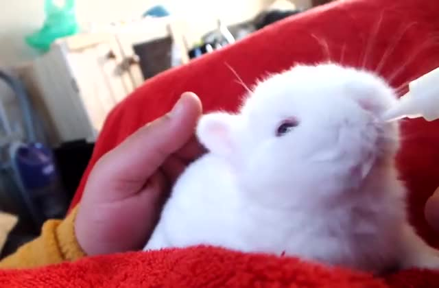 Watch /r/suckysucky - from NatBywaters23 GIF by @cakejerry on Gfycat. Discover more aww, baby animal, bunny, cute, rabbit, suckysucky GIFs on Gfycat