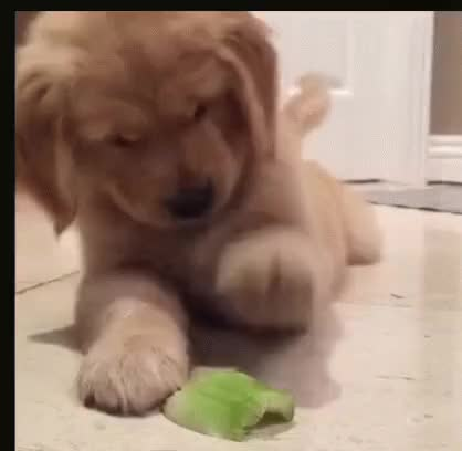 Watch and share Puppy Face GIFs on Gfycat