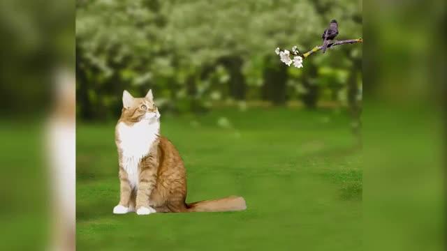 Watch and share Кошка И Птица GIFs by Татьяна on Gfycat