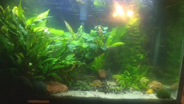 Watch and share Planted Tank GIFs by wyzegye on Gfycat
