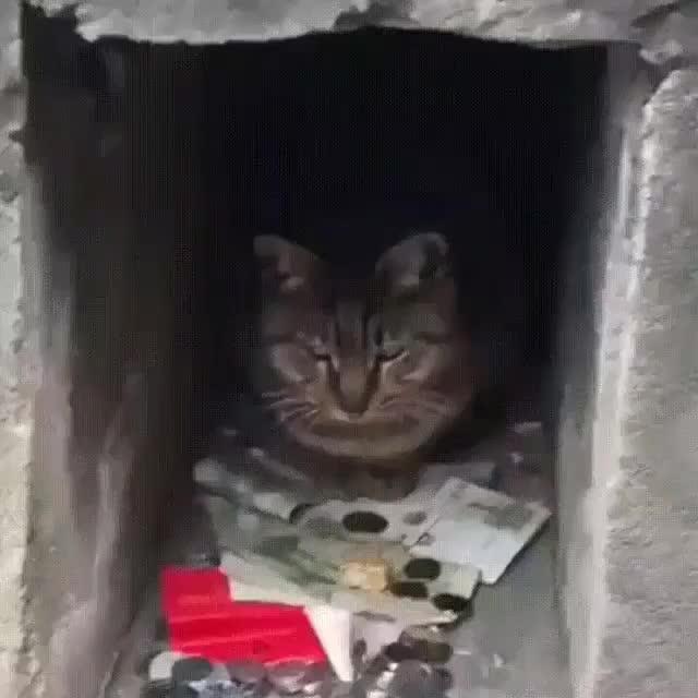 Watch and share Petsofinsta GIFs and Catstagram GIFs by Lera Panova on Gfycat