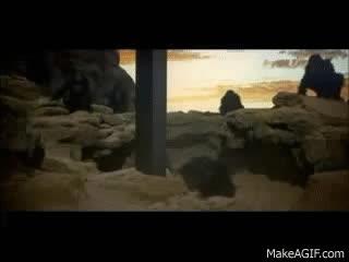 Apes see tall slab GIFs