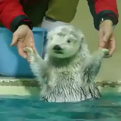 cute baby animal videos pics, Me, when water is cold 😂 Via @mochan8686 GIFs
