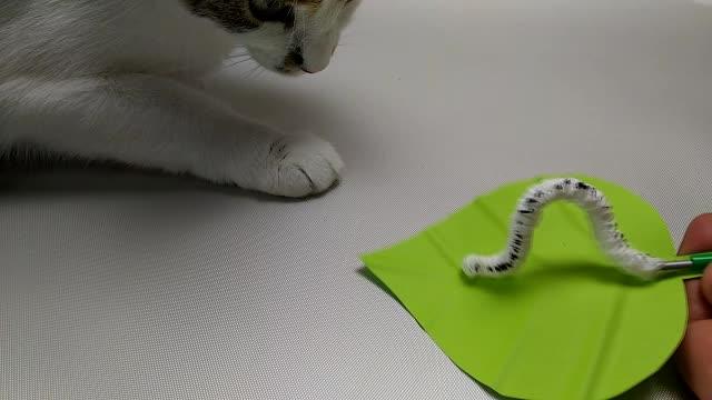 cat, caterpillar, diy, DIY caterpillar GIFs