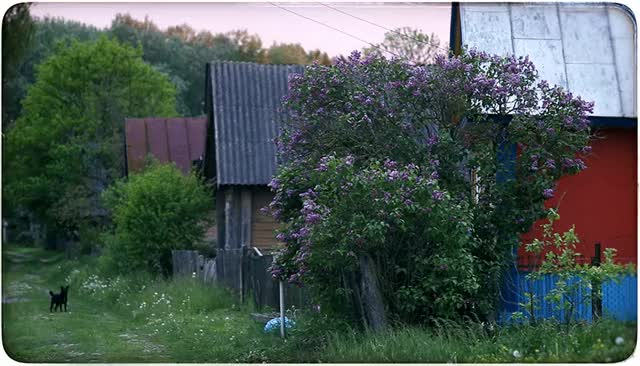 Watch and share The Lilac Bush GIFs by maxsunrise on Gfycat