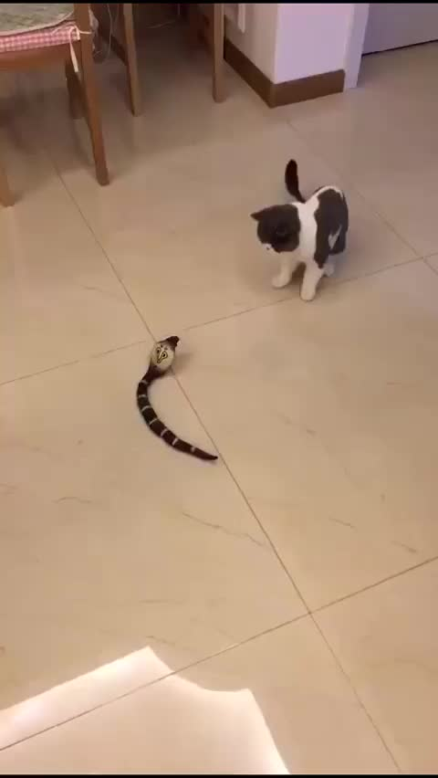 Watch Cat surprised by an aggressive mechanical snake GIF on Gfycat. Discover more cat, snake, startled cats GIFs on Gfycat