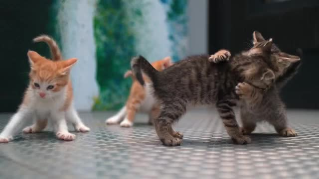 Watch and share Slow Mo 4K Kittens GIFs on Gfycat