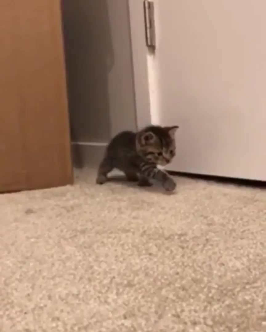 The mighty hunter stalks its prey GIFs