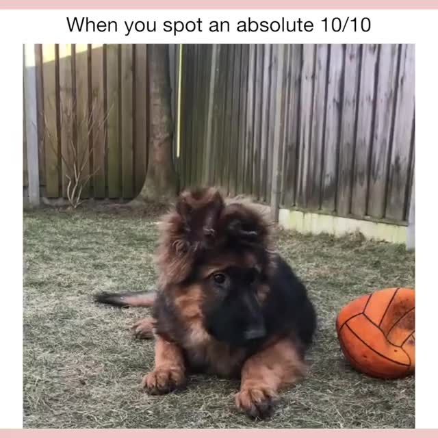Watch and share Doggo GIFs and Cute GIFs by Sunshine Collector on Gfycat