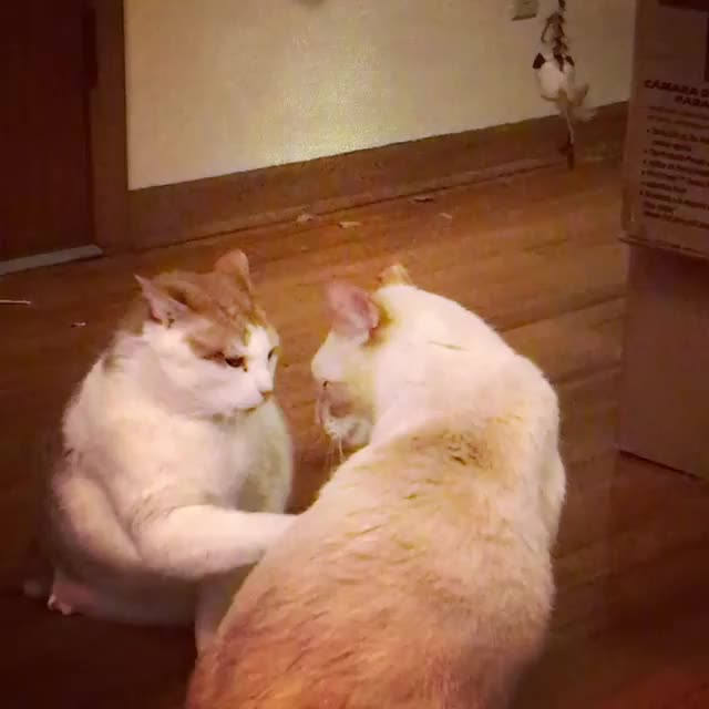 Watch /r/CatsBeingCats - from lousuewho2 GIF by @cakejerry on Gfycat. Discover more related GIFs on Gfycat