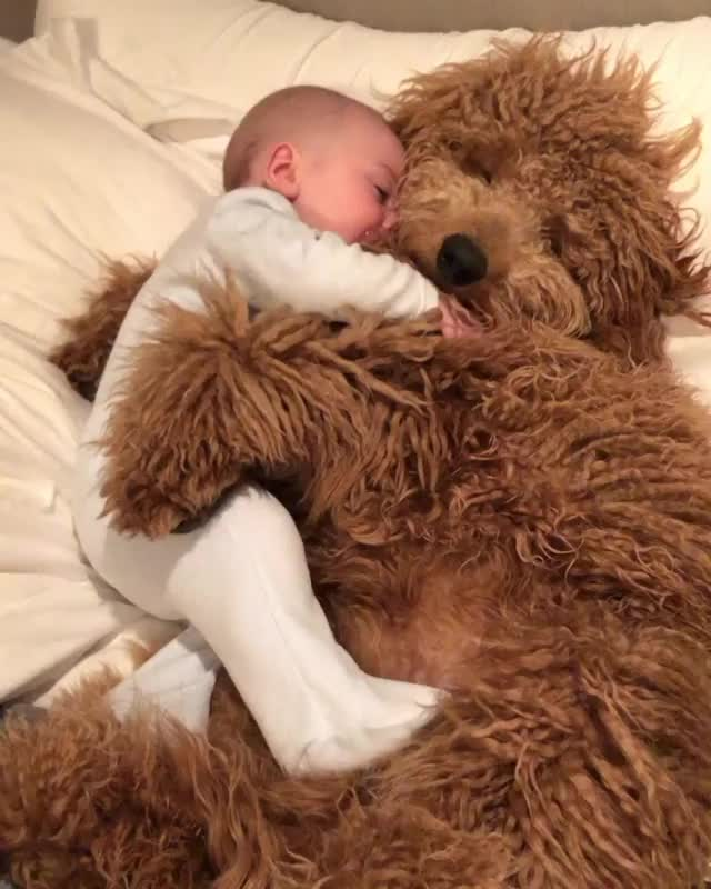 Watch and share Baby GIFs and Dog GIFs by Mr.Ghost on Gfycat