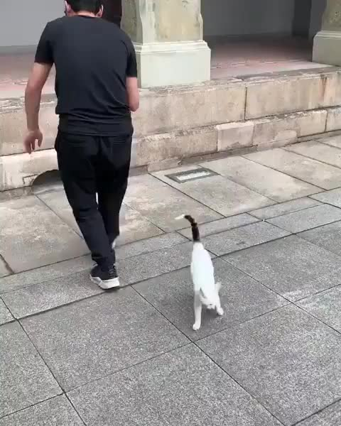 Watch and share Meowed By 9gag GIFs and Modelling GIFs on Gfycat
