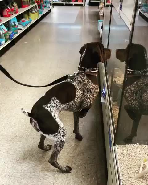 Bird dog encounters birds at the pet store GIFs
